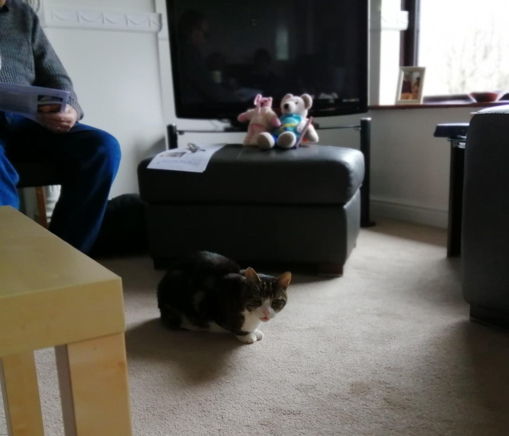 cat and teddies at lent 2